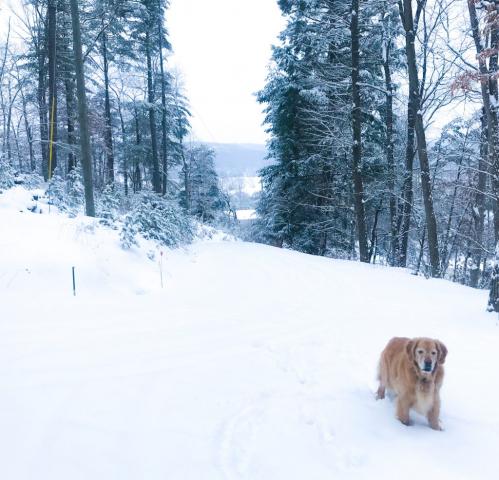 Dog Hiking in snow at Rushing River Art Studio