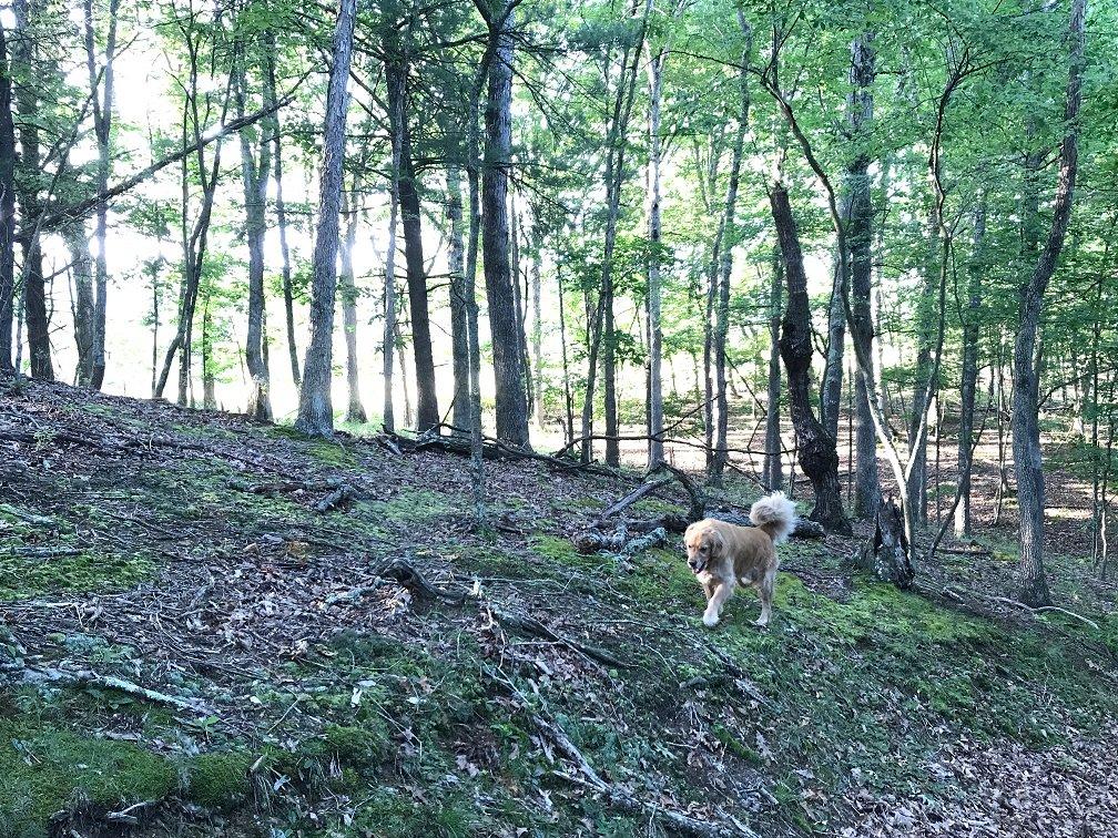 Hiking in Woods at Rushing River Art Studio
